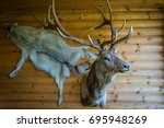 Mounted Stag Head on Cabin Wall. wooden Russian house in Siberia. antlers and a wolf pelt on the background of wooden log walls. - stock photo