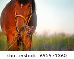 beautiful red horse in the... | Shutterstock . vector #695971360