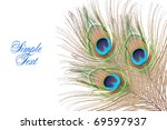 feathers of a peacock. isolated