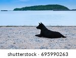 thai black dog beside the sea... | Shutterstock . vector #695990263