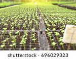 agriculture and seeding plant... | Shutterstock . vector #696029323