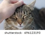 Cat Stroked By A Hand At Home