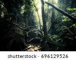 Small photo of Mysterious landscape of foggy forest. Roots of exotic trees, thicket of shrubs and ferns against sunlight breaking through dense foliage on background. Fantasy nature and fairy tale background