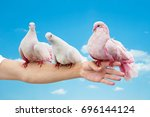 three pigeons sitting on the... | Shutterstock . vector #696144124