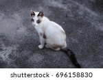 feral cat is a cat that has... | Shutterstock . vector #696158830