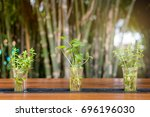 deorate plant in glasses on... | Shutterstock . vector #696196030