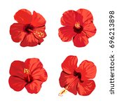 hibiscus flowers set. vector... | Shutterstock .eps vector #696213898