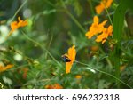 natural flowers in rural