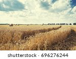 wheat field after harvest and