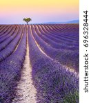 lavender fields in france at... | Shutterstock . vector #696328444