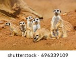 funny image from african nature.... | Shutterstock . vector #696339109