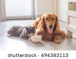 british shorthair cats and... | Shutterstock . vector #696383113