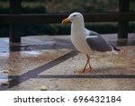 gull | Shutterstock . vector #696432184