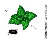 nettle vector drawing. isolated ... | Shutterstock .eps vector #696441859