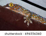 Small photo of Closeup of a Asia Gecko (Gecko gecko).