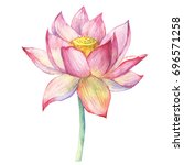 pink flowers lotus  water lily  ... | Shutterstock . vector #696571258