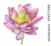 pink flowers lotus  water lily  ... | Shutterstock . vector #696571468