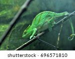 close up of chameleon ... | Shutterstock . vector #696571810