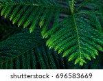 foliage  | Shutterstock . vector #696583669