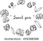 sweet pea  illustration on... | Shutterstock .eps vector #696588388