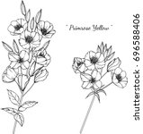 primrose  illustration on white ... | Shutterstock .eps vector #696588406