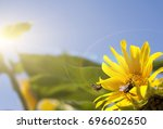 close up of sunflower and bees... | Shutterstock . vector #696602650