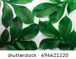 green leaf pattern natural and... | Shutterstock . vector #696621220