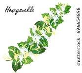 honeysuckle  lonicera  japonica ...   Shutterstock .eps vector #696654898