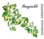 honeysuckle  lonicera  japonica ... | Shutterstock .eps vector #696654910