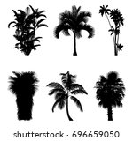 tropical trees and palm trees... | Shutterstock .eps vector #696659050