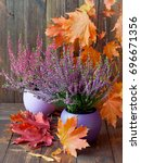 blooming heather and colorful... | Shutterstock . vector #696671356