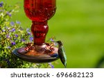 Green Hummingbird Resting At...