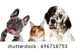 Stock photo dog and cat portrait 696718753