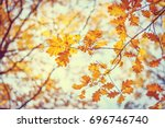 autumn oak leafes  very... | Shutterstock . vector #696746740