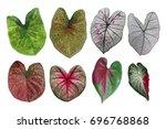 heart shaped fancy leafed... | Shutterstock . vector #696768868