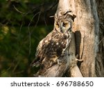 great horned owl perched in old ... | Shutterstock . vector #696788650