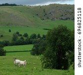 Two Sheep In Rural Setting Nea...