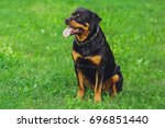 Beautiful Rottweiler Dog....