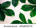 green leaf pattern natural and... | Shutterstock . vector #696856570
