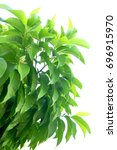 green fresh leaf treetop branch ... | Shutterstock . vector #696915970