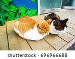 Stock photo two kittens against a wooden floor 696966688