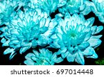 flowers as a background | Shutterstock . vector #697014448