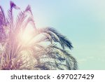 palm tree with pale blue sky... | Shutterstock . vector #697027429