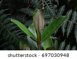 flora of the iguaque fauna and... | Shutterstock . vector #697030948