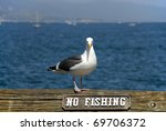 Seagull Standing Next To A No...