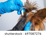 treatment of a small dog with a ...   Shutterstock . vector #697087276