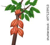 cocoa tree  | Shutterstock .eps vector #697125913