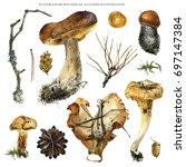 watercolor botanical autumn... | Shutterstock . vector #697147384