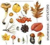 watercolor botanical autumn...   Shutterstock . vector #697147390