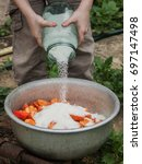 apricots in a large basin to...